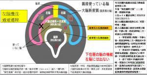 3重腦原理