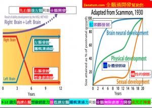 3-12歲先高速右腦想像創意力後低速左腦邏輯溝通力則能全腦無限創新力開發成天才神童