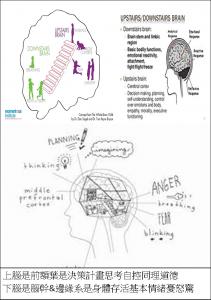 Brain上下二層腦