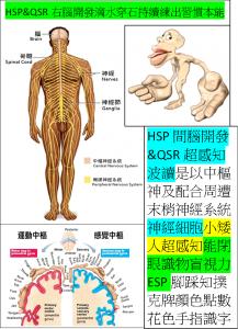 HSP&QSR右腦開發滴水穿石持續練出小矮人超感知習慣本能