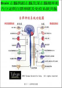 HSP&QSR腦波頻率共振自律神經(交感與副交感)系統