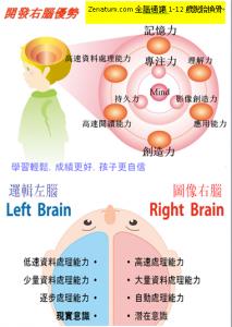 Zenatum.com全腦通讓1-12歲右腦開發脫胎換骨