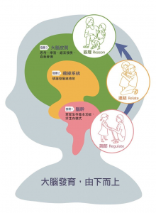 brain由下而上發展大腦