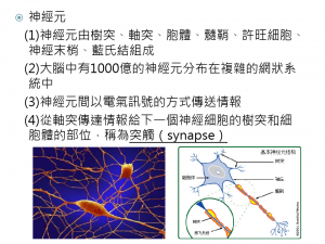 neuro神經元