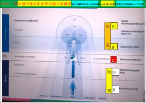 Body人體全息全像全能全知全腦5區圖譜(量子糾纏頻率信息&生物能場與Healy量子波儀及微電流生物電磁能-分子身體)