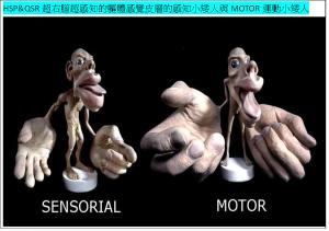 HSP&QSR超右腦-超感知與運動2小矮人