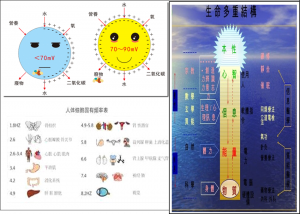 Healy細胞膜電壓&各器官頻率&生物能量信息場